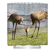 A Mother's Lesson Shower Curtain by Carol Groenen
