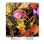 A New Season Blooms Shower Curtain by Karol Livote