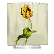 A Parrot Tulip Shower Curtain by James Holland