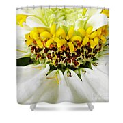 A Small Crown Of Glory Shower Curtain by Sarah Loft