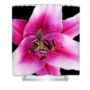 A Star Is Born - Pink Stargazer Lily by Sharon Cummings Shower Curtain by Sharon Cummings