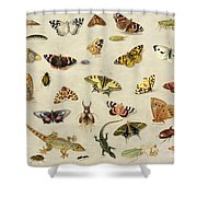 A Study Of Insects Shower Curtain by Jan Van Kessel