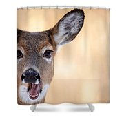 A Talking Deer Shower Curtain by Karol  Livote