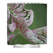 Abstract by Nature Shower Curtain by Nola Lee Kelsey
