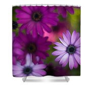 African Daisy Collage Shower Curtain by Mike Reid
