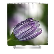 African Daisy Shower Curtain by Joy Watson