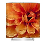 After The Rain Shower Curtain by Anne Gilbert