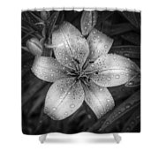After The Rain Shower Curtain by Scott Norris