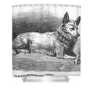 Alaskan Husky Shower Curtain by Granger