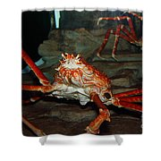 Alaskan King Crab 5d24125 Shower Curtain by Wingsdomain Art and Photography