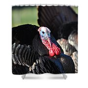 All Turkey Shower Curtain by Todd Hostetter