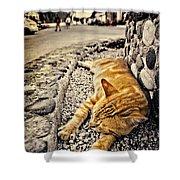 Alley Cat Siesta In Grunge Shower Curtain by Meirion Matthias