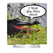 Alligator Greeting Card Shower Curtain by Al Powell Photography USA