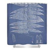 Alsophila Ornata Shower Curtain by Aged Pixel