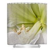 Amaryllis Shower Curtain by Adam Romanowicz