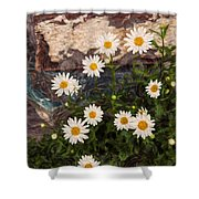 Amazing Daisies Shower Curtain by Omaste Witkowski