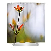Amber Glow Shower Curtain by Christina Rollo