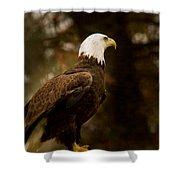 American Bald Eagle Awaiting Prey Shower Curtain by Douglas Barnett