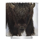American Bison Portrait Shower Curtain by Tim Fitzharris