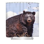 American Black Bear Shower Curtain by Janice Rae Pariza