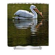 American White Pelican Shower Curtain by Elizabeth Winter