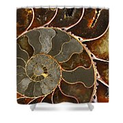 Ammolite Shower Curtain by Elena Elisseeva