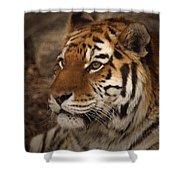 Amur Tiger 2 Shower Curtain by Ernie Echols