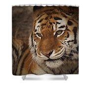 Amur Tiger 4 Shower Curtain by Ernie Echols