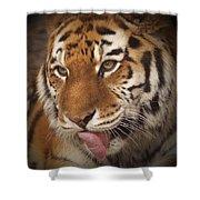 Amur Tiger 5 Shower Curtain by Ernie Echols