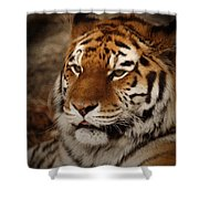 Amur Tiger Shower Curtain by Ernie Echols