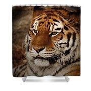 Amur Tiger Shower Curtain by Ernie Echols