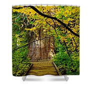An Old Growth Douglass Fur In The Grove Of The Patriarches Mt Rainer National Park Shower Curtain by Jeff Swan