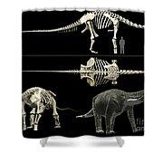 Anatomy Of A Titanosaur Shower Curtain by Rodolfo Nogueira
