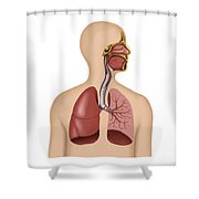 Anatomy Of Human Respiratory System Shower Curtain by Stocktrek Images