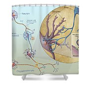 Anatomy Of Neurons Shower Curtain by Carlyn Iverson