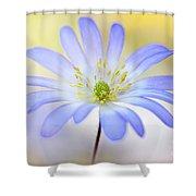 Anemone Blanda Shower Curtain by Jacky Parker