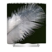 Angel Feather Shower Curtain by Carol Lynch