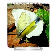 Angels Of The Morning Shower Curtain by Tami Quigley