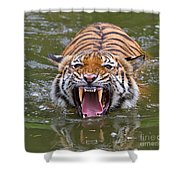 Angry Tiger Shower Curtain by Louise Heusinkveld