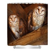Animal - Bird - A couple of barn owls Shower Curtain by Mike Savad