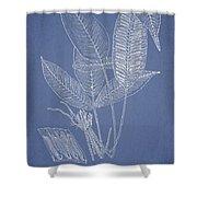 Anisogonium lineolatum Shower Curtain by Aged Pixel