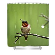 Another Rainy Day Hummingbird Shower Curtain by Christina Rollo
