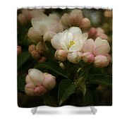 Apple Blossom Time Shower Curtain by Mary Machare
