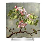Apple Blossoms And A Hummingbird Shower Curtain by Martin Johnson Heade