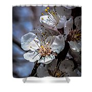 Apple Blossoms Shower Curtain by Robert Bales