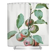 Apples Shower Curtain by Pierre Joseph Redoute