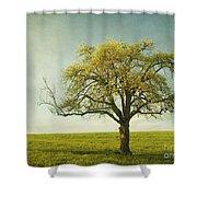 Appletree Shower Curtain by Priska Wettstein
