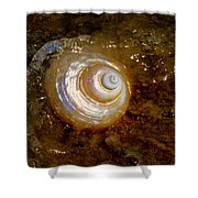 Apricot Oceans Shower Curtain by Karen Wiles