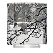 April Snow Shower Curtain by Kay Novy