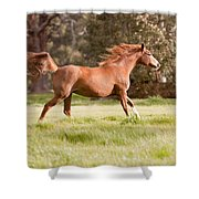 Arabian Horse Running Free Shower Curtain by Michelle Wrighton